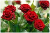 BookGiving - roses